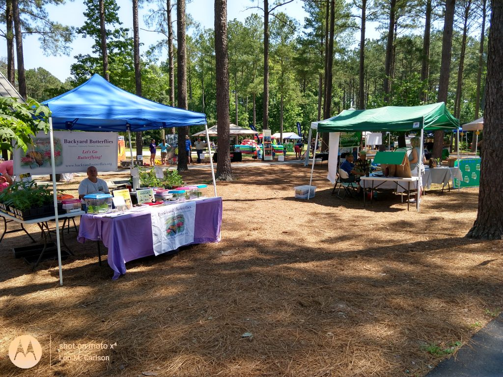 Long Leaf Pine Festival