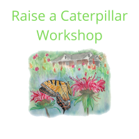 Registration – Raise a Caterpillar Workshop
